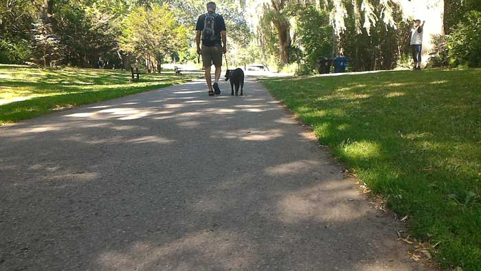 Man and dog walking in the shade at Taylor Creek Park
