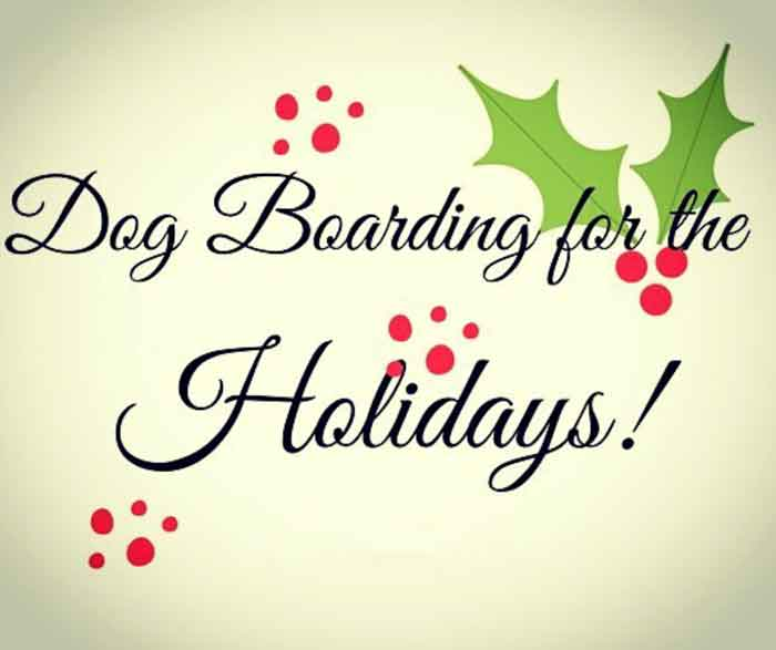 Toronto East dog boarding and doggy daycare